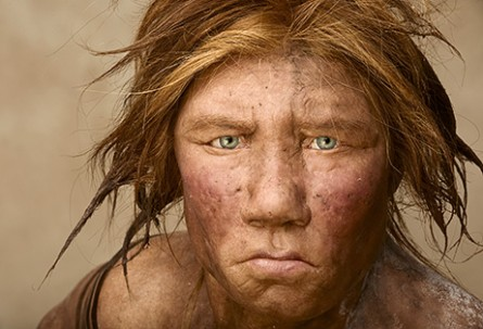 homo de neandertal